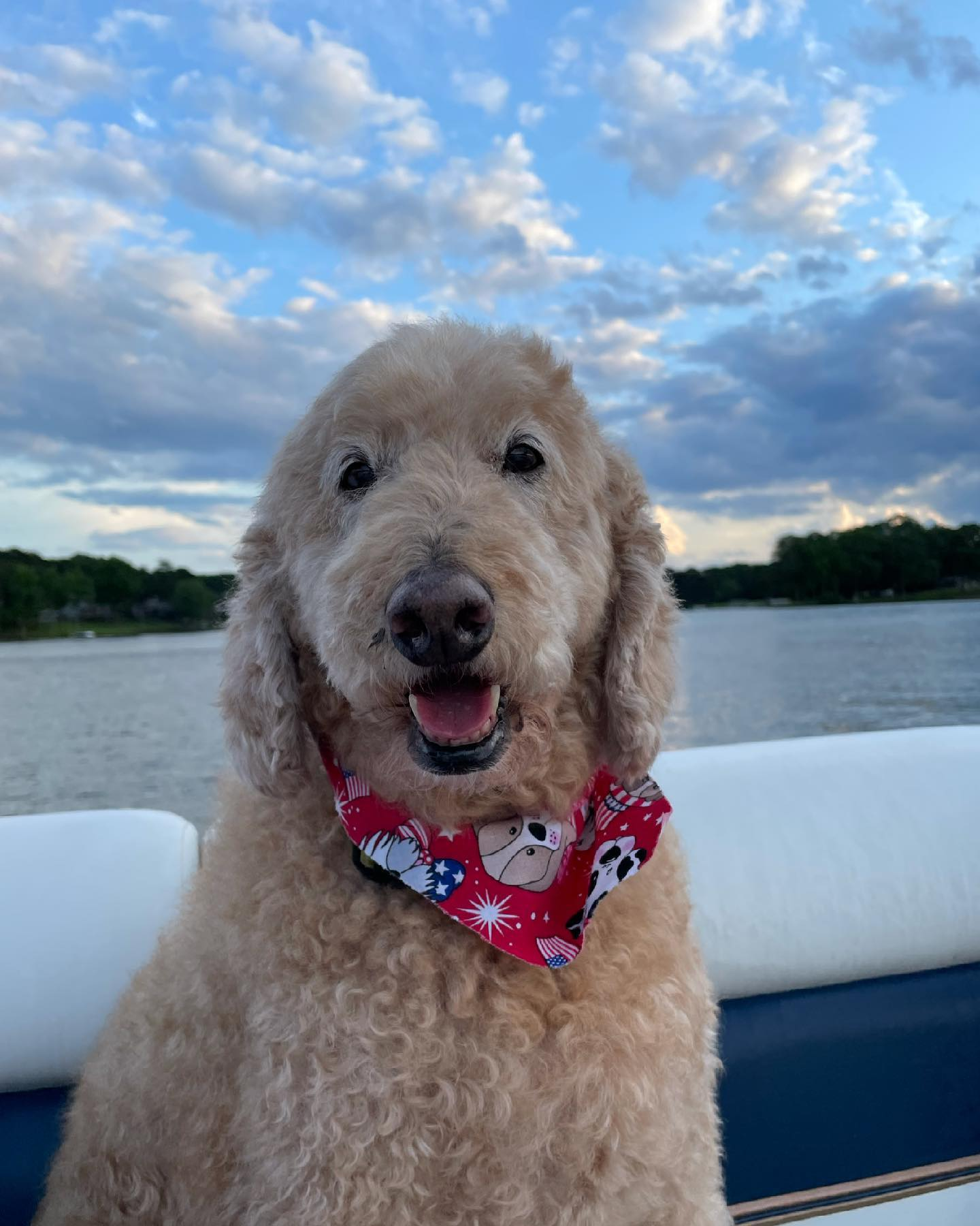Happy July 4th from our fluffy friends!✨🎇🇺🇸 #july4th #goldendoodlesofinstagram #lakelife